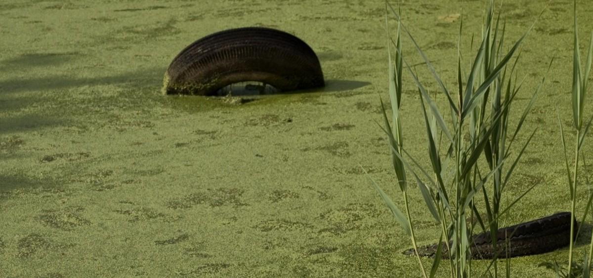 Algae_Filled_Pond