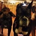 dogs_treat