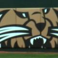 Ohio softball wall with Bobcat image