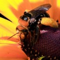 honey bees FEATURE