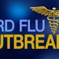 avian flu FEATURE
