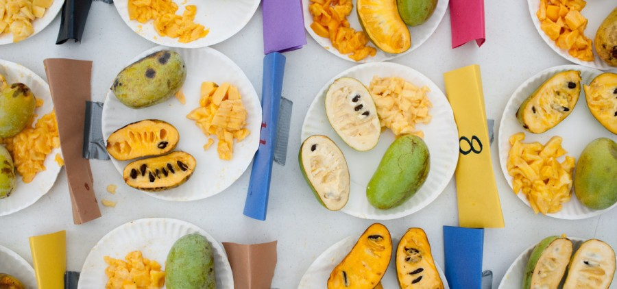 Entries for the best-tasting pawpaw contest are displayed during the 17th Annual Ohio Pawpaw Festival at Lake Snowden. (Yi-Ke Peng/WOUB)
