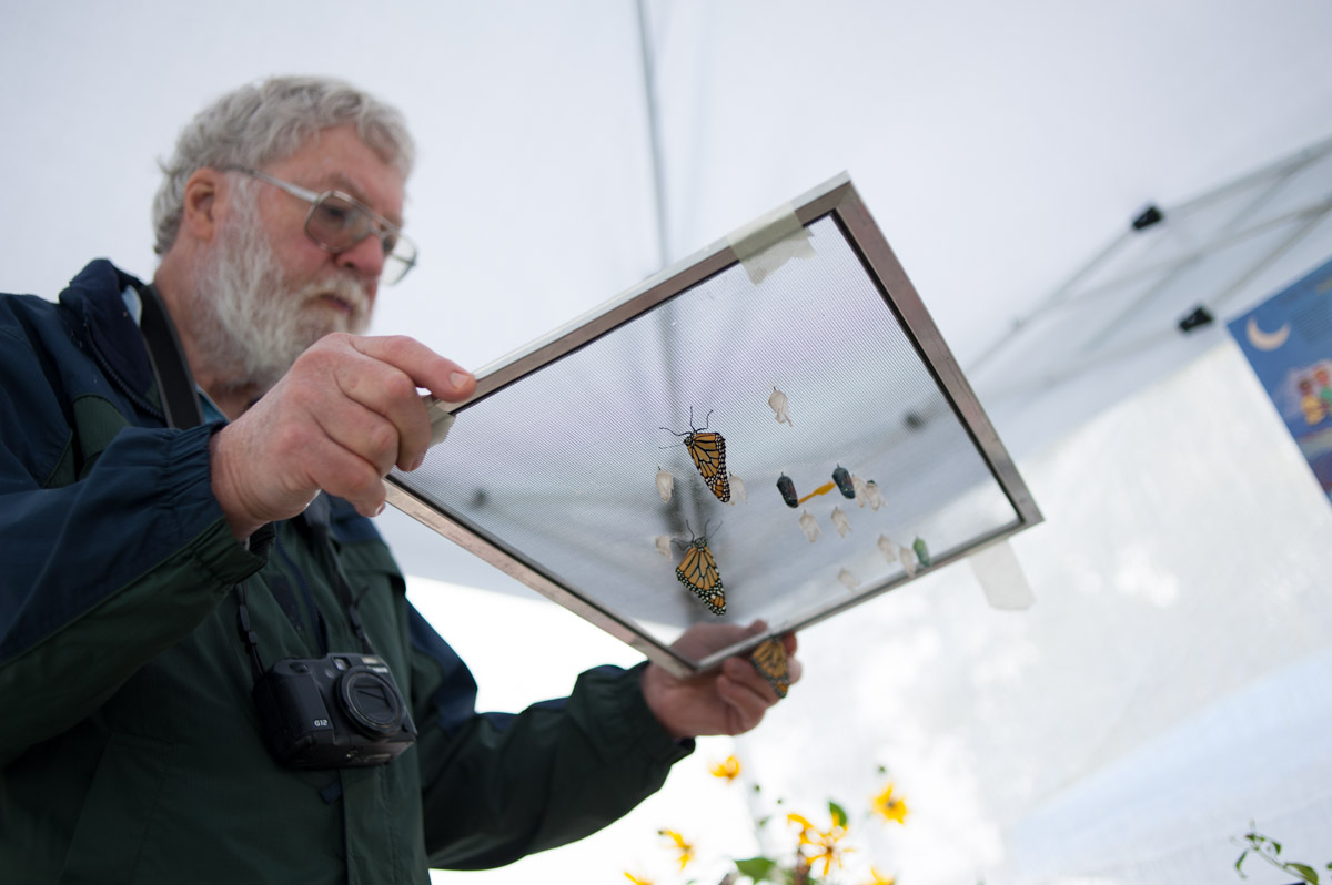 Larry Turner of Columbus, Ohio, holds up the Monarch butterflies that he and his wife raised during an exhibition at the Ohio Paw Paw Festival. (Yi-Ke Peng/WOUB)