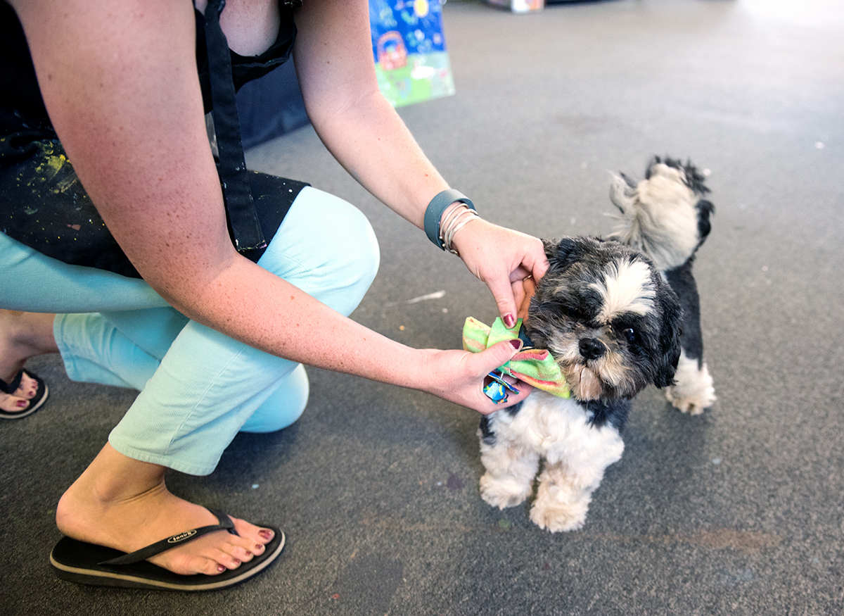 Mallory Vallentour buts a bowtie on her dog, a shitzu named Rocco during the Passion Works Summer Bash on West State Street on Saturday, Sept. 19, 2015.