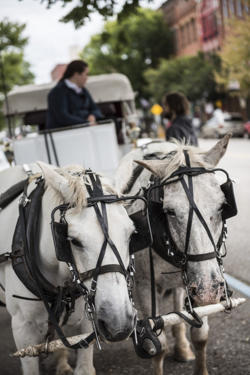 Horse drawn carriage rides are a extremely popular. The horses had just finished a ride and will soon be carrying another festival attendee.