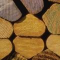 timber trees lumber