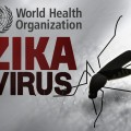 Zika virus FEATURE