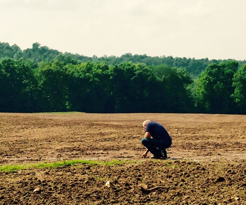 Christian Co., Kentucky, farmer Kendall Clark is betting big on these fields sown with hemp. (Credit: Nicole Erwin)