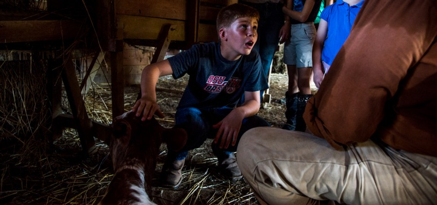 Max Harshen (left) listening to Herb Wasserstorm, 71, speak about the calf her mother mother in the barn at Slate Run Living Historical Farm's morning chores program in Canal Winchester, Ohio, on September 10, 2016. Wasserstorm has worked for the Farm for 27 years. (WOUB/ Carolyn Rogers)