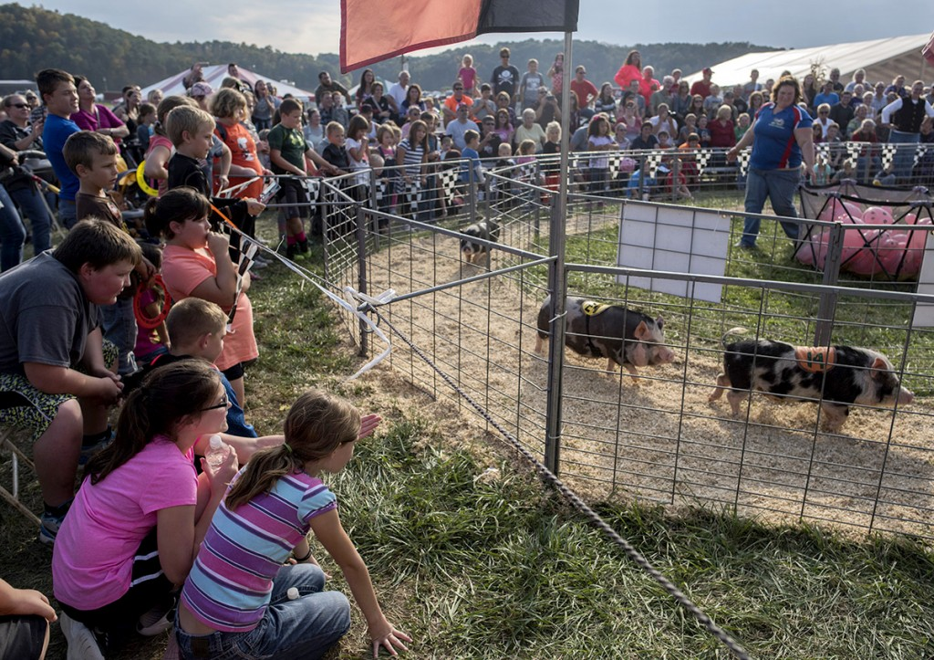 An audience watches as potbelly pigs race around a small track at the Hogway Speedway during the 46th annual Bob Evans Farm Festival on Saturday, Oct., 15, 2016 in Rio Grande, Ohio. The Hogway Speedway hosted audience participated pig and duck races for entertainment. (Kelsey Brunner/WOUB)