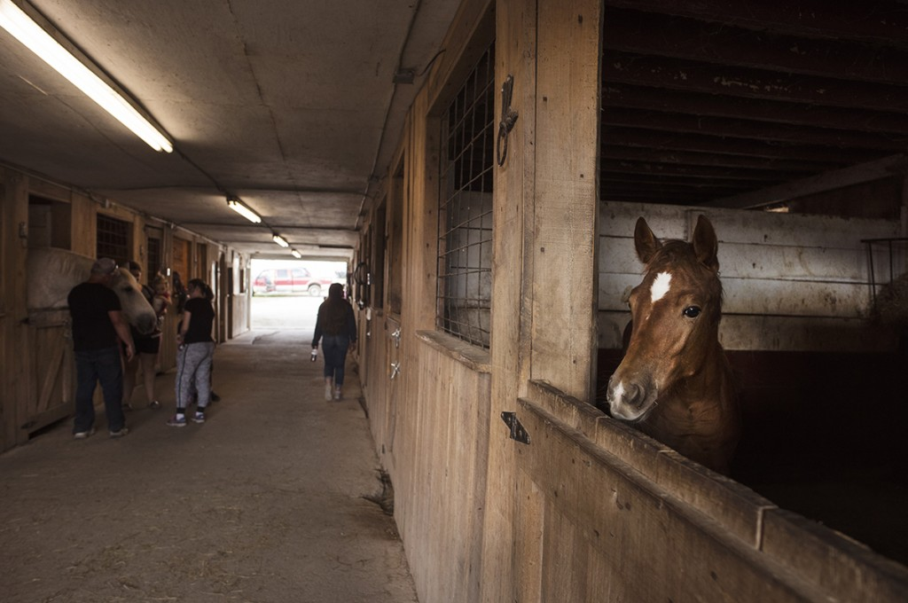 A foal stands in a stall in Rio Valley Stables while people visit with the horses on the Bob Evans Farm at their 46th annual festival on Saturday, Oct. 15, 2016 in Rio Grande, Ohio. The Bob Evans Farm and Rio Valley Stables partnered and allow visitors to interact with the animals. (Kelsey Brunner/WOUB)