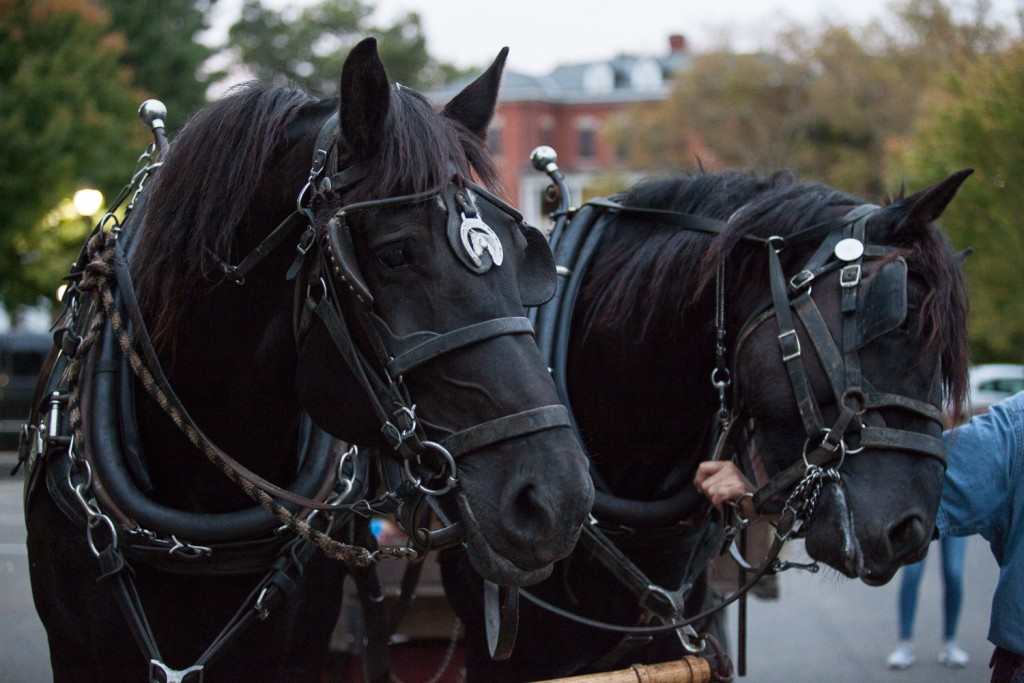 Horses wait patiently for the start of the historical hay ride tours that took place at the Ridges on Friday, October 7, 2016. (Erin Clark/WOUB)