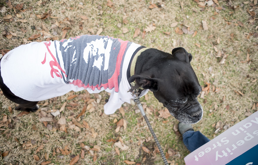 A protester's dog, Ramulus, wears a shirt at the Ross County Women's March on January 21, 2017. (Camille Fine/WOUB)