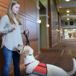Maria Martin demonstrates some of the commands service dog in-training, Spad, knows.
