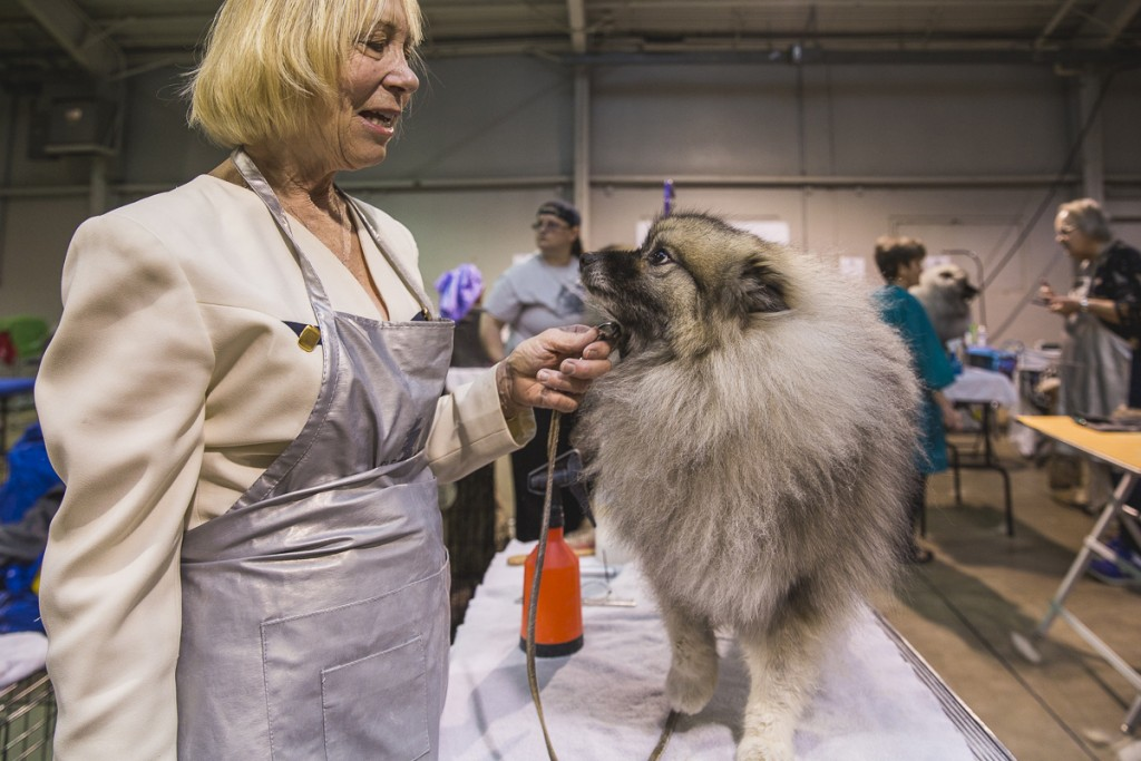 Bonnie Hronek, of Hinckley, Ohio, pauses from grooming to talk to her Keeshond, Raina. (Erin Clark/WOUB)