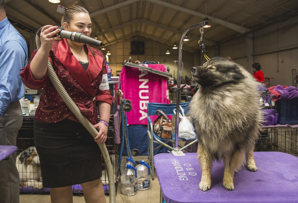 Ashley Houk, of Indiana, blow dries her Keeshond, Gigi, at the Central Ohio Kennel Club Dog show on April 23, 2017. (Erin Clark/WOUB)