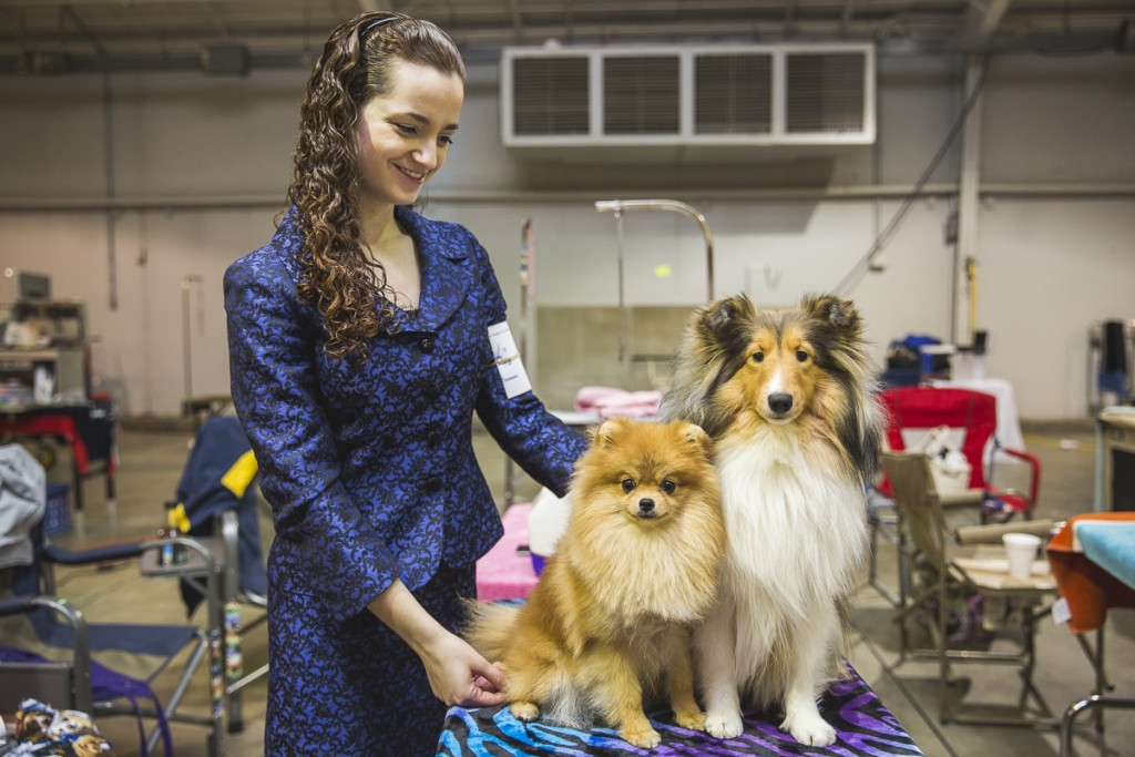 Samantha Aimar, a 19-year-old from Brownstown, Michigan, poses with her Sheltie and Pomeranian, Kira. Aimar has been showing dogs since she was nine and is the youngest handler to ever rank a Pomeranian. (Erin Clark/WOUB)
