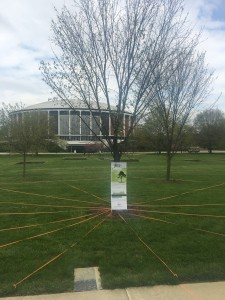 A tree on the Walter Hall lawn has it's roots mapped out by the campus landscape coordinator