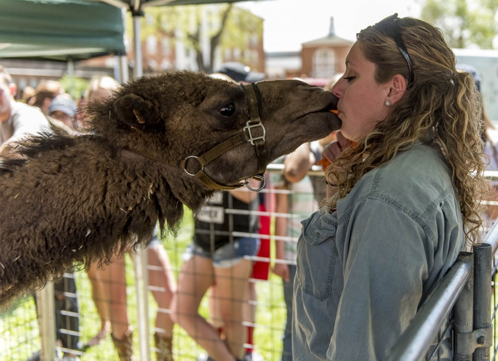 Allision Osting gives Carl a kiss to feed him a carrot at the Zoo To You event at Ohio University on April 18, 2017. (Daniel Linhart/WOUB)