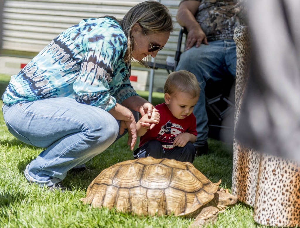 A child holds his mother's hand as he examines the tortoise at the Zoo To You event on April 18, 2017. (Daniel Linhart/WOUB)