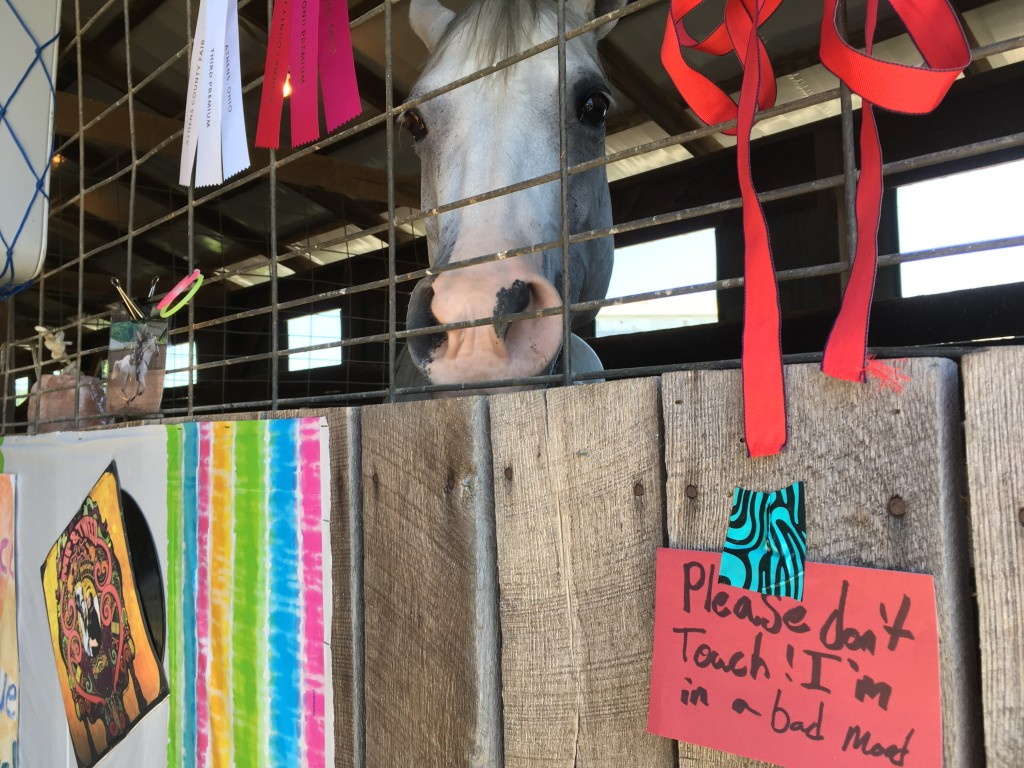 A horse takes a time-out at the Athens County Fair on Tuesday.  Photo by Susan Tebben / WOUB News