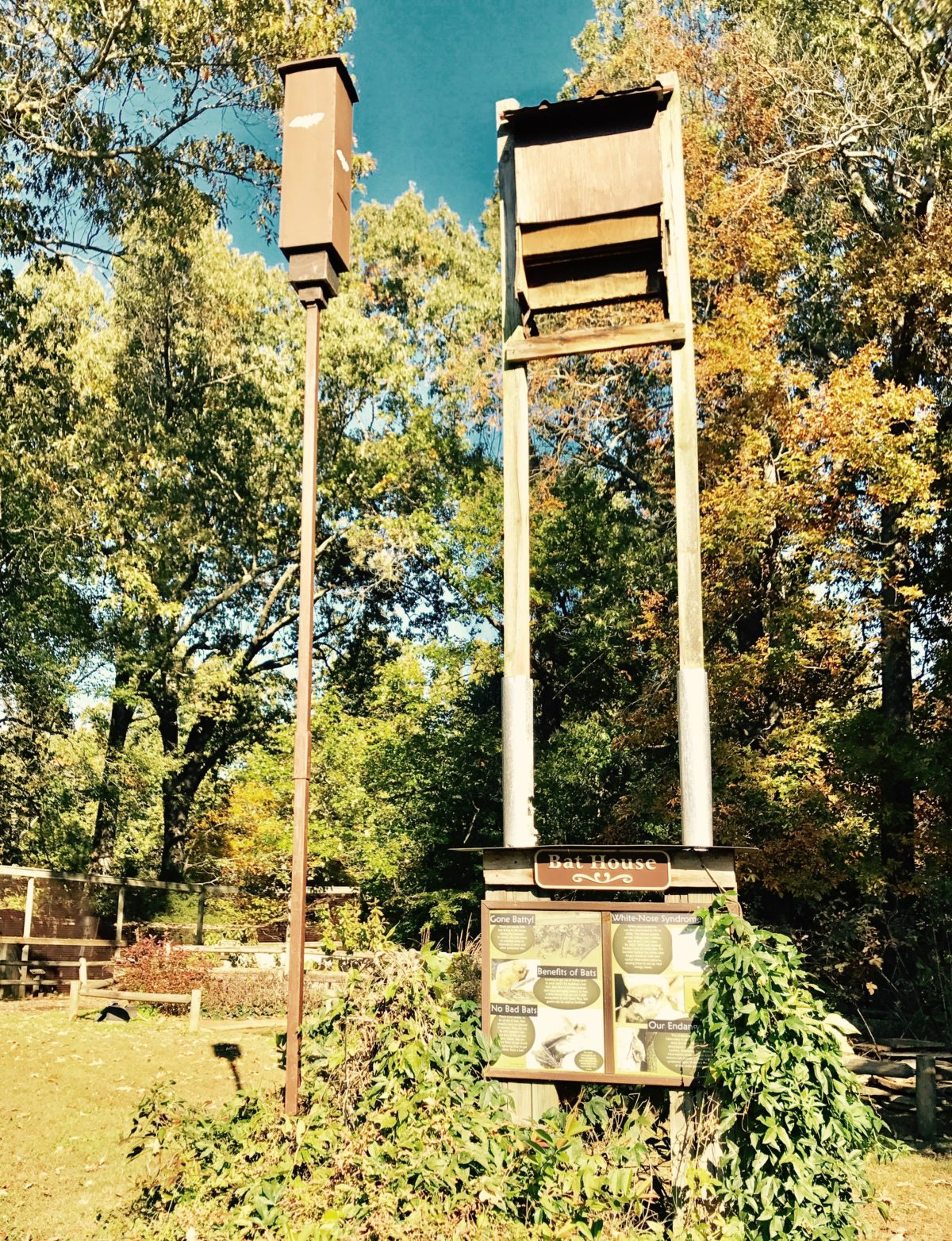 Bat houses at Land Between the Lakes Woodland Nature Station. (Nicole Erwin | Ohio Valley ReSource)
