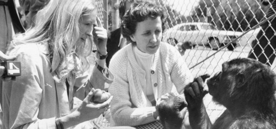 "Koko, the gorilla who became an ambassador to the human world through her ability to communicate, has died. She's seen here at age 4, telling psychologist Francine ""Penny"" Patterson (left) that she is hungry. In the center is June Monroe, an interpreter for the deaf at St. Luke's Church, who helped teach Koko."