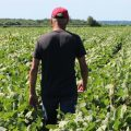 Farmer Terry Davidson walks through his soy fields in Harvard, Ill. Soybean prices have fallen this summer — a process that started even before the U.S. and China hit each other with tariffs in early July.