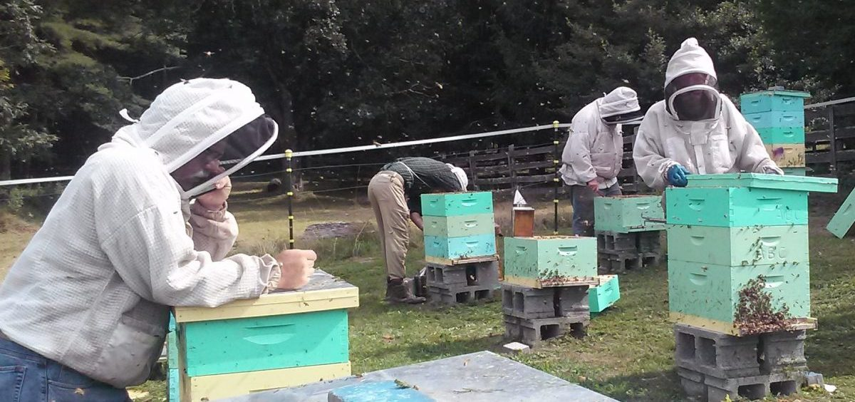 Members of the Appalachian Beekeeping Collective inspect one of their apiaries. The collective trains displaced coal miners in West Virginia on how to keep bees as a way to supplement their income.