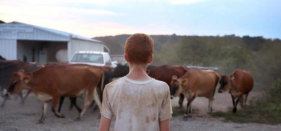 "Nolan family farm - POV ""Farmsteaders"" boy watching cattle"