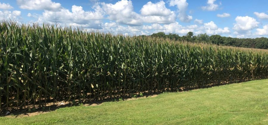 Tom Folz grows thousands of acres of corn and soybean in western KY.