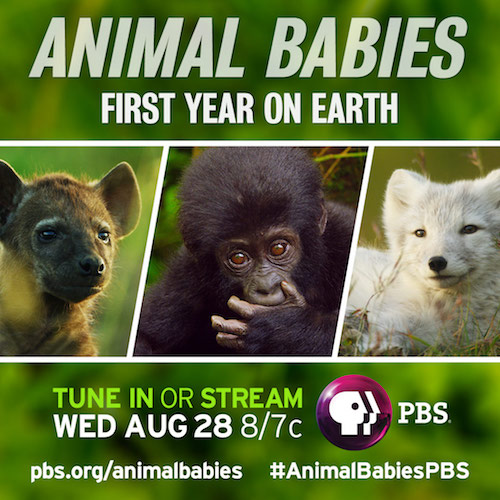 PBS Show Animal babies - First year on Earth