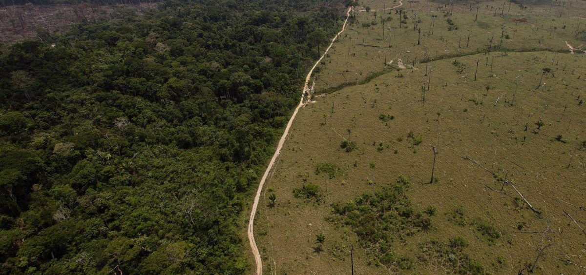 Large swaths of forest have been cut down in Brazil in recent decades to make room for farming. Deforestation contributes to global warming, and reversing it will be necessary to avoid catastrophic climate change.