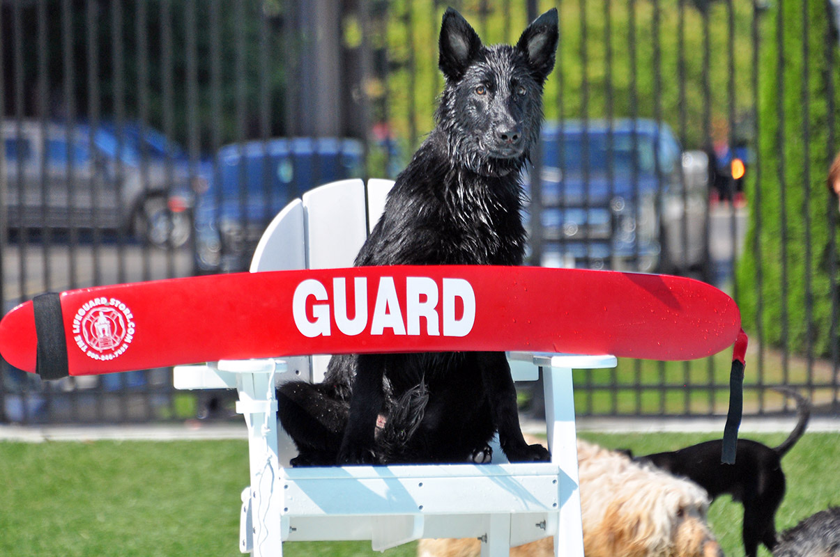 A dog sits on a lifeguard chair
