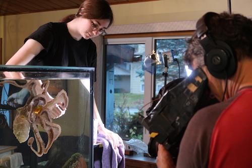 Camera operator filing octopus in tank