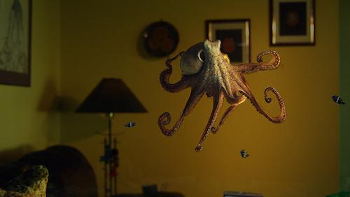 Octopus in tank