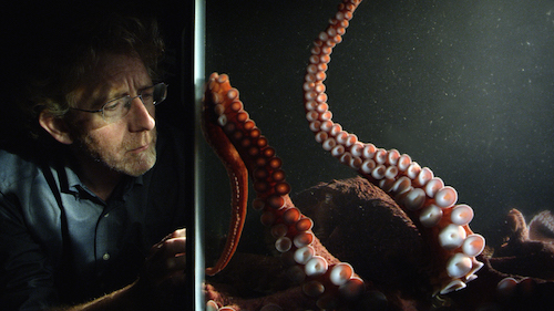 Producer staring at octopus in tank
