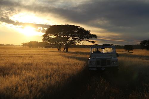 A jeep driving through the Serengeti