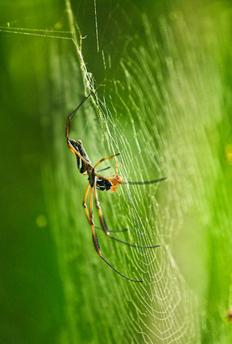 """Spider - NATURE: """"Undercover in the Jungle"""""""
