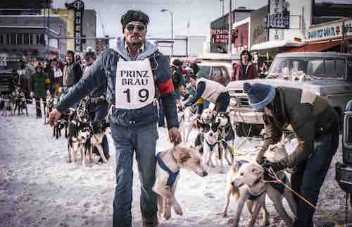 Dug musher hooking dogs to sled at race start