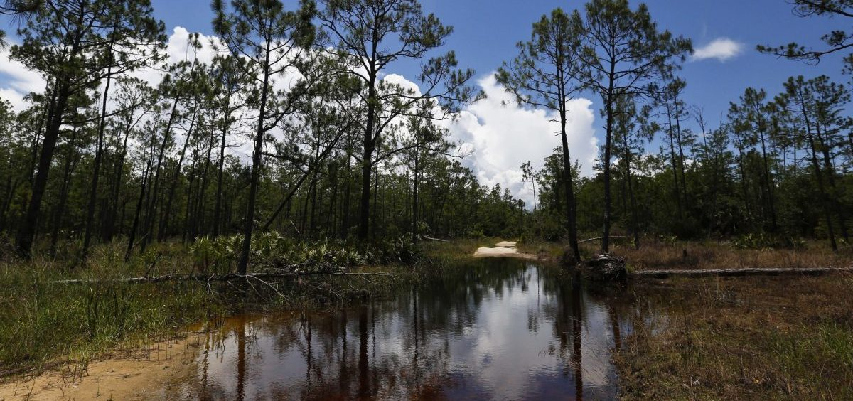 The U.S. Environmental Protection Agency is moving to roll back government limits on pollution in wetlands and smaller waterways