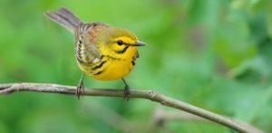 A bird sits on a branch