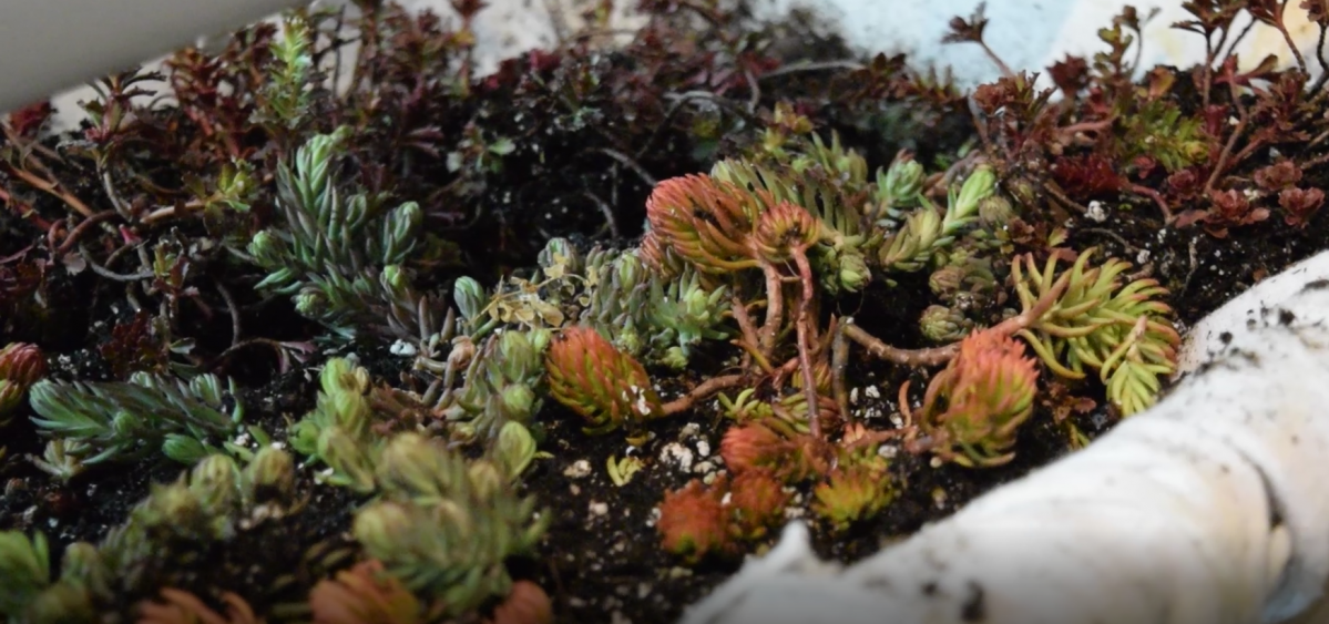 Plants grow on a green roof-style garden