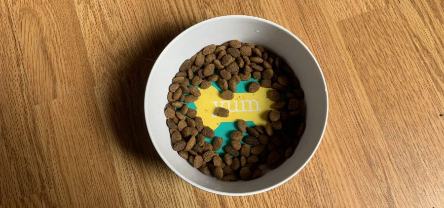 Some dog food in a bowl.