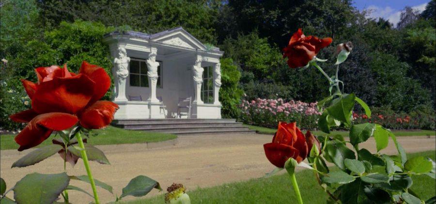 roses in Buckingham Palace garden