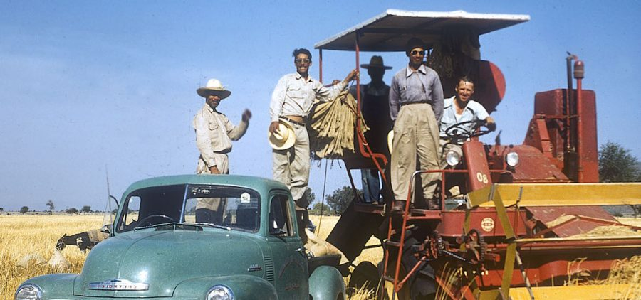 Norman Borlaug with Mexican field technicians in wheat field