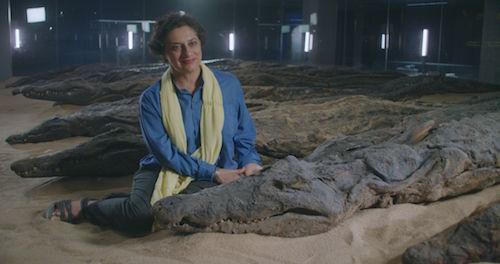 Professor Salima Ikram with a crocodile at the Crocodile Museum in Luxor, Egypt.
