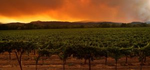 A local resident stands next to a vineyard while watching the LNU Lightning Complex fire burning in nearby hills on August 20 in Healdsburg, Calif.