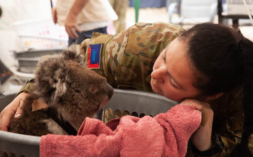 Member of the Australian Defense comforts a koala.