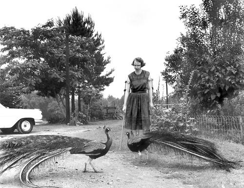 Flannery O'Connor with her peacocks.